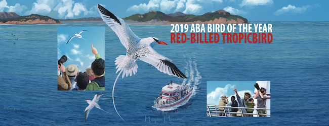 Introducing the 2019 ABA Bird of the Year